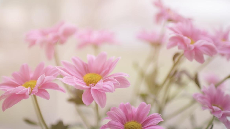 Il significato e la storia segreta dei fiori