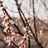 Filastrocche di aprile